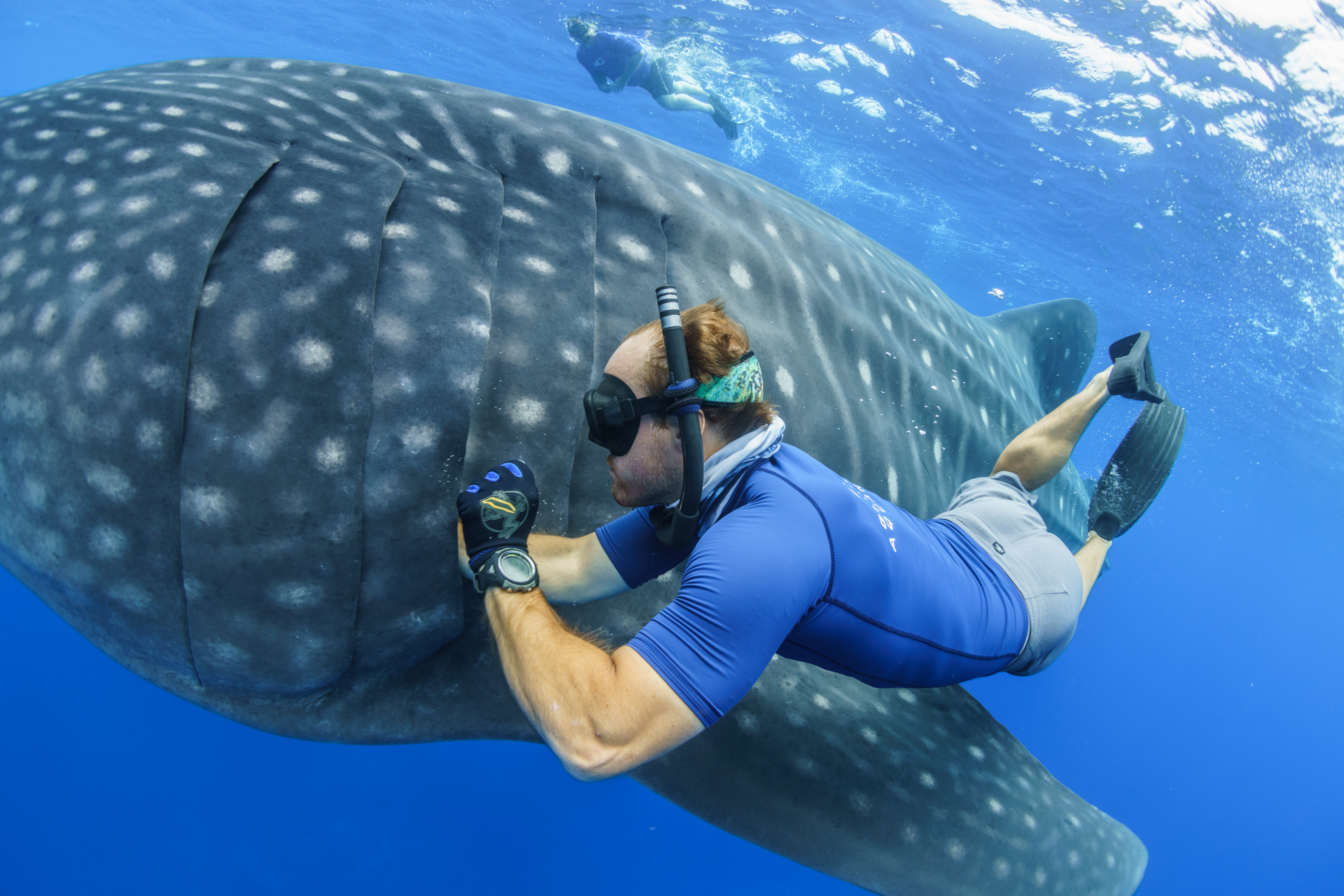 Wildbook For Whale Sharks Images, Photos, Reviews